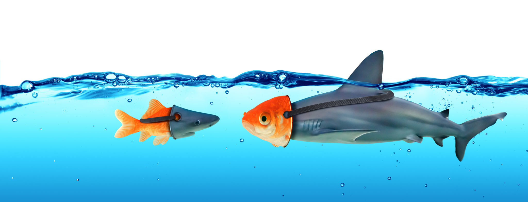 Deception Concept - Disguise Between Shark And Goldfish